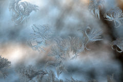 Frostiga ismodeller på fönsterexponeringsglas arkivbilder