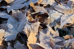 frostiga leaves Arkivbild