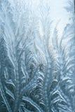 Frostiga modeller på exponeringsglas i vinter Royaltyfri Bild