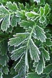 frostiga sena växter för fall royaltyfri foto