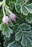 frostiga sena växter för fall royaltyfria bilder
