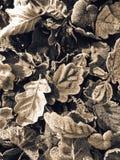 Frostiga sidor som ligger på jordningen Arkivfoton