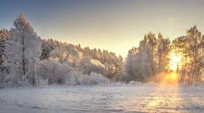 Frostiga träd på soluppgång med gult solljus i vintermorgon Den snöig vintern landskap vita röda stjärnor för abstrakt för bakgru arkivbild