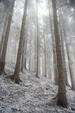 frostiga trees Royaltyfri Bild