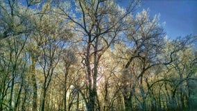 frostiga trees Arkivbilder