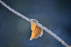 Frostigt blad Royaltyfria Foton