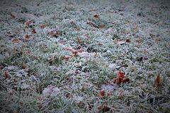 Frostigt fält i skugga i höstmorgon Royaltyfria Bilder