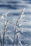 frostigt gräs arkivfoton