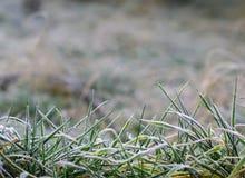 frostigt gräs för bakgrund fotografering för bildbyråer