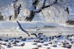Frostigt landskap för morgonvinter i parkera för ligganderussia för 33c januari ural vinter temperatur Sträng frost, snöig träd,  royaltyfri fotografi