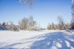 Frostigt landskap för morgonvinter i parkera för ligganderussia för 33c januari ural vinter temperatur Sträng frost, snöig träd,  royaltyfria bilder