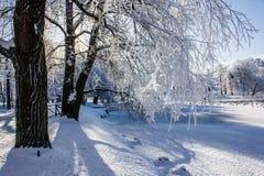 Frostigt landskap för morgonvinter i parkera för ligganderussia för 33c januari ural vinter temperatur Sträng frost, snöig träd,  arkivfoto