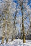 Frostigt landskap för morgonvinter i parkera för ligganderussia för 33c januari ural vinter temperatur Sträng frost, snöig träd,  royaltyfria foton
