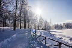 Frostigt landskap för morgonvinter i parkera för ligganderussia för 33c januari ural vinter temperatur Sträng frost, snöig träd,  fotografering för bildbyråer