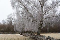 Frostigt lantligt landskap royaltyfri fotografi