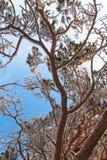 Frostigt sörja trädfilialen arkivbild