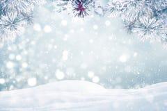 Frostigt sörja trädvinterbakgrund arkivfoto