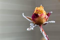 frostigt steg Fotografering för Bildbyråer