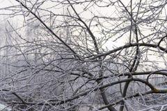 Frostigt träd i morgonen med filialer som täckas med rimfrost Royaltyfri Fotografi