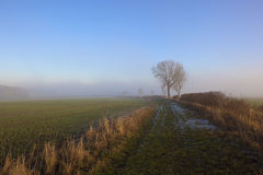Frostigt vandringsled- och askaträd fotografering för bildbyråer