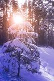 Frostigt vinterlandskap i snöig skog Arkivfoton