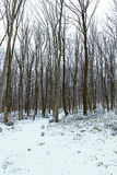 Frostigt vinterlandskap i snöig skogvinterskog royaltyfri bild