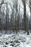Frostigt vinterlandskap i snöig skogvinterskog royaltyfri foto