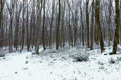 Frostigt vinterlandskap i snöig skogvinterskog arkivfoto