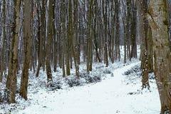 Frostigt vinterlandskap i snöig skogvinterskog fotografering för bildbyråer