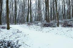 Frostigt vinterlandskap i snöig skogvinterskog royaltyfria foton