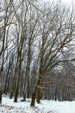 Frostigt vinterlandskap i snöig skogvinterskog arkivbilder