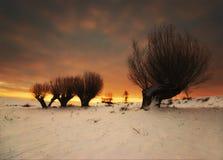 Frostigt vinterträd som är upplyst vid resningsolen Arkivfoton