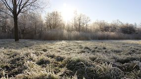 Frostiness in winter. Cold winter  frosty on open space and grass in sunny day in Usedom Island. Germany Royalty Free Stock Image
