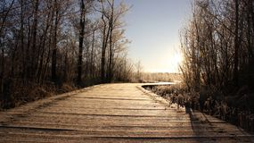 Frostiness in winter. Dew covered on long bridge. Cold winter  frosty in sunny day dew cover on wooden bridge by wetland in Usedom Island. Germany Stock Photo