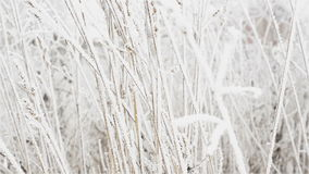 Frosting on meadow grass stock video