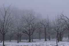 Frosting Mystic Trees Royalty Free Stock Photography