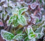 Frostiskristall Royaltyfri Fotografi