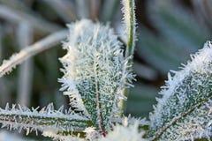 Frostkristaller royaltyfri bild
