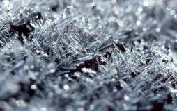 Frostmakroslut upp Arkivfoto
