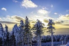 frostmorgonvykortet reflekterade vinter för tree för sun för snow för rimefloden skinande solig Royaltyfria Bilder