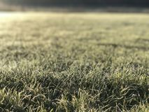 Frosts in the field of a green well-groomed lawn stock image