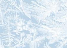 Froststerne Stockbilder