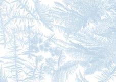 Froststerne Lizenzfreies Stockbild