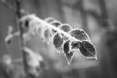 frosty 4 ogrodu obrazy royalty free