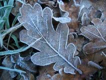 frosty Zdjęcie Stock