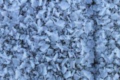 frosty Imagem de Stock Royalty Free