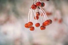 Frosty Apple-Baum Stockbild