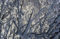 Frosty attire of trees 1. Branches of trees covered with snow and hoarfrost Royalty Free Stock Image