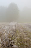 Frosty autumn, foggy morning in the meadow.Vertical. Poland.Meadows near Narew river in October.Frosty autumn, foggy morning in the meadow.Dense fog and frost Royalty Free Stock Image