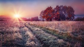 Frosty autumn landscape at sunrise on meadow. Colorful scenery autumn with hoarfrost on the grass and bright sun on horizon. Fall. Nature stock photography